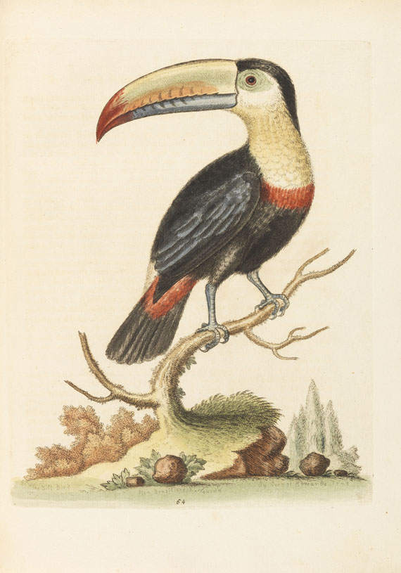 George Edwards - Natural history of birds + Gleanings of natural history. 7 Bände -