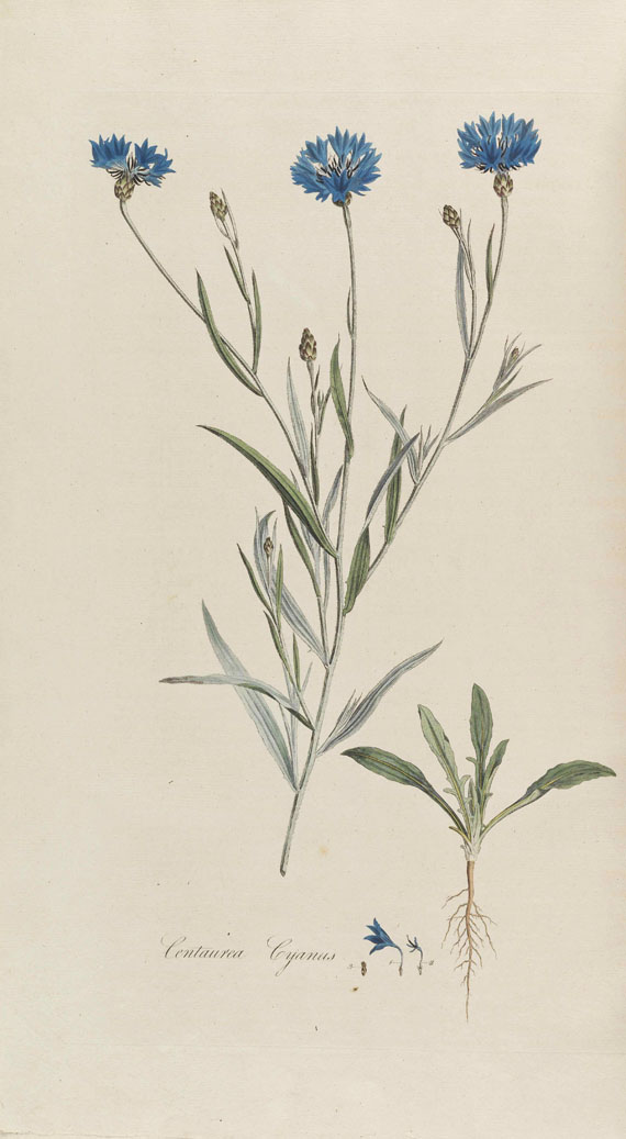William Curtis - Flora Londinensis -